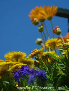 beautifully combine color in flower garden design