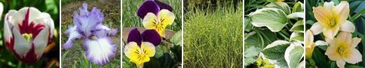 easy flower gardening