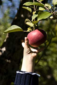 fruit gardening tips