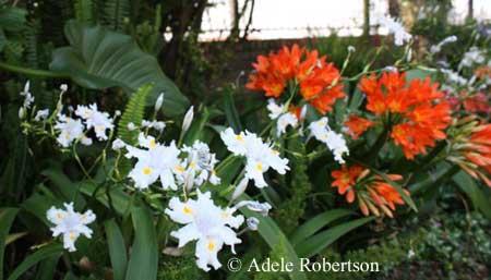 home flower gardening