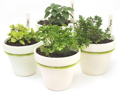 indoor herb container gardening