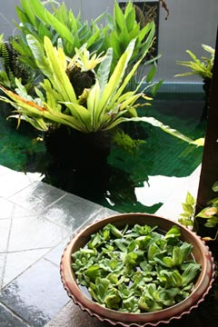 indoor water gardening