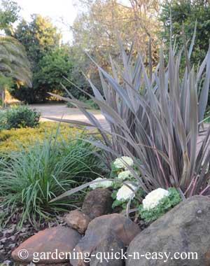 liriope ornamental grass