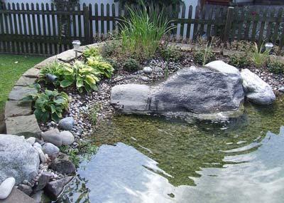water gardening rockpool