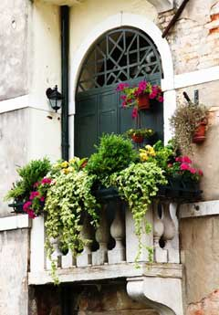 flower container gardening