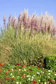 Ornamental grasses a must have in every garden for Quick growing ornamental grasses