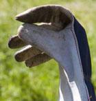 rose gardening glove