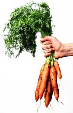 vegetablegardening tip