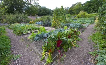 vegetable gardening tip
