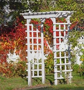 diy tip for gardening build a arbour