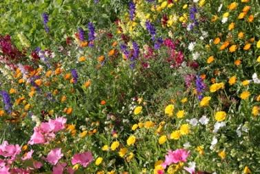 Organic Flower Gardening